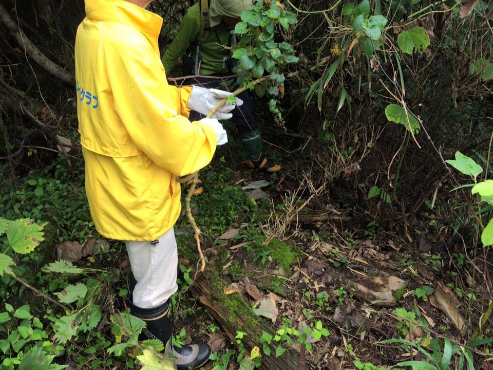 鳥取熊井浜にて特定外来種の『アレチウリ』の調査と駆除