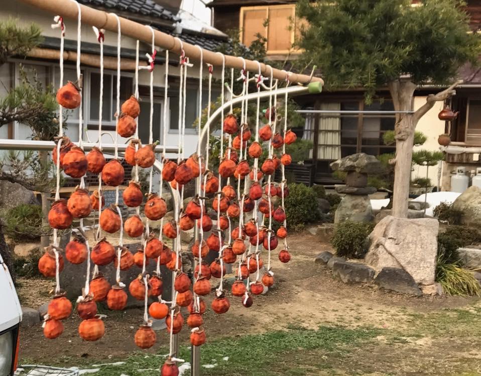 岩美でも干し柿作り