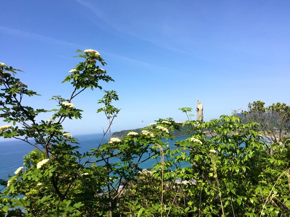 岩美町桐山の登山道整備と自生ササユリ保護