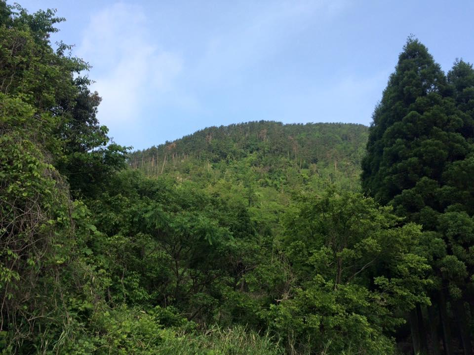 中部歩こう会の皆様と駟馳山の石畳から頂上まで登山