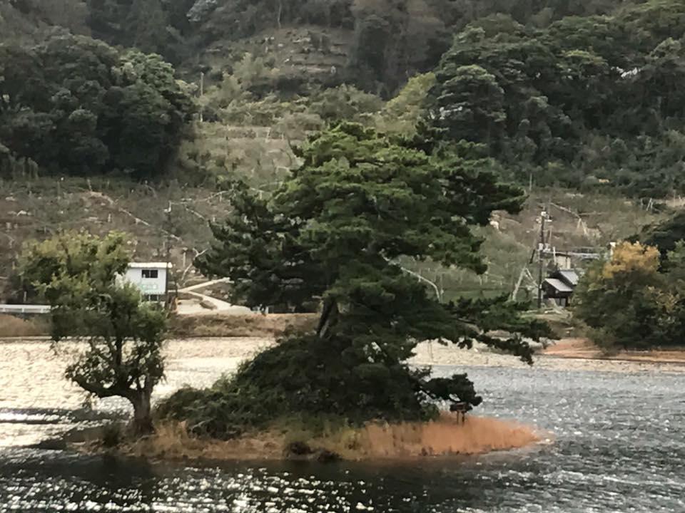 自然保護活動をした帰りに多鯰ヶ池にある弁財天(弁天宮)にお詣りして仕事運・金運アップ祈願もいいかも?!自然保護をしてくれてありがとう~っとお種さんも喜んでくれるかもです♪
