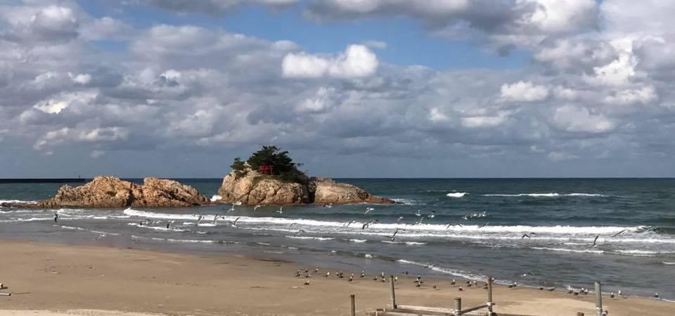 浦富海岸でうみねこの集いと佇まいと羽ばたきを鑑賞