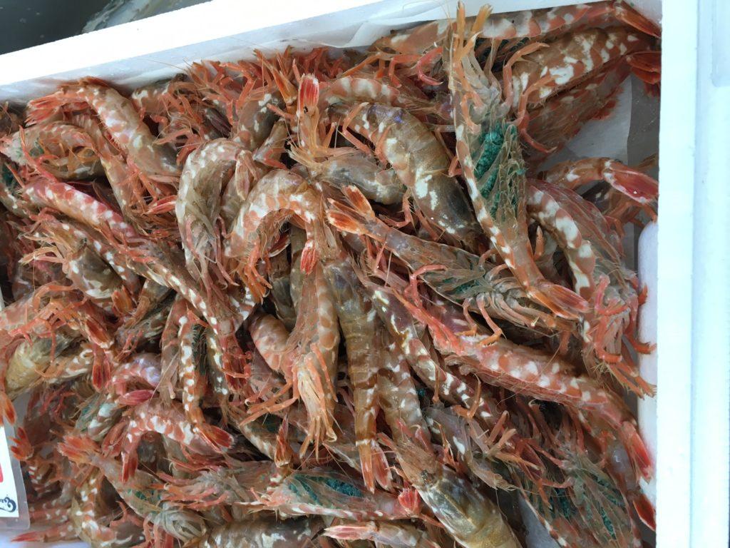 岩美町の特産品ババちゃんとモサエビの旬と食べれるお店は?