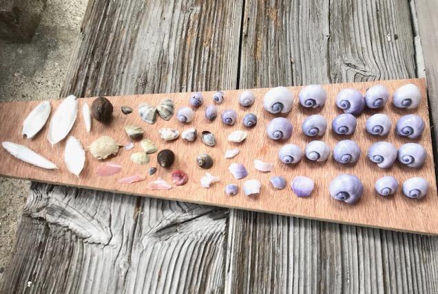 浦富海岸の打ち上げ貝のオブジェ作り・タコブネに出会いたい